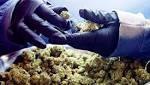 Marijuana Stocks Fell the Day Before Canada Legalizes It